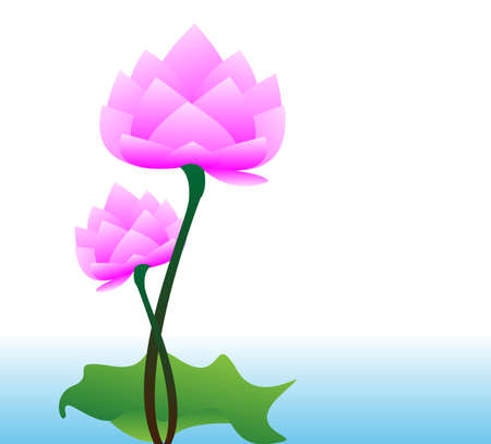water lilly: Vector Lotus