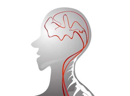 cerebral artery: human brain vector  Illustration