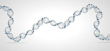 genetica: Molecola di DNA struttura di fondo