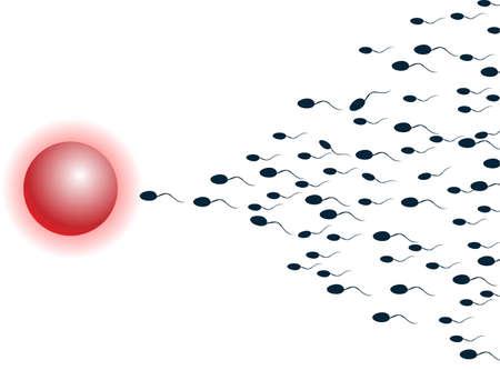 masculino: Espermatozoides vectoriales, flotando a un óvulo