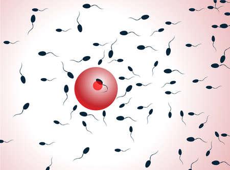espermatozoides: Espermatozoides vectoriales, flotando a un óvulo
