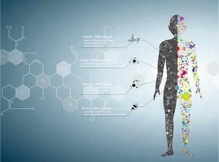 anatomie humaine: Mol�cule concept de corps de l'ADN humain Eps10