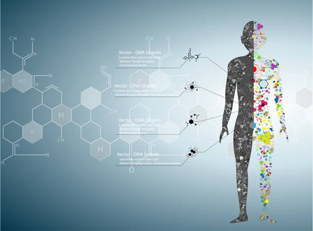 Molecuul lichaam begrip van het menselijk DNA Eps10 Stock Illustratie