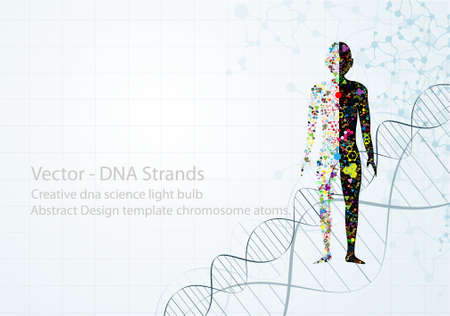 adn humano: Concepto de cuerpo molécula del ADN humano Eps10 Vectores