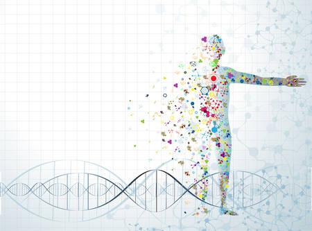genetica: Concetto di corpo Molecola di DNA umano Vettoriali