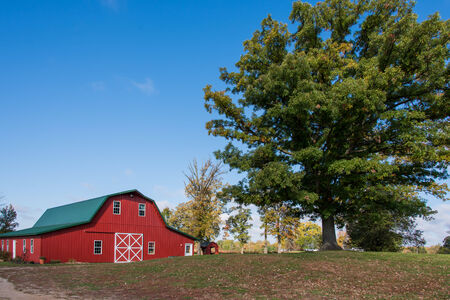 red barn: This is a red barn next to a large tree in Minnesota.