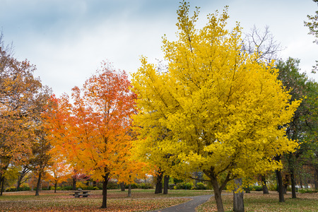 These are trees displaying autumn colors in Minnehaha Park in Minneapolis, Minnesota.