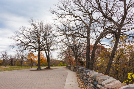 This are trees located in Minnehaha Park in Minneapolis, Minnesota. This was taken during late autumn. This is near the waterfall.