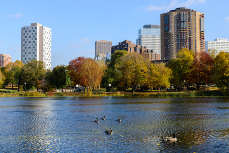 canadian geese: This is Loring Park in Minneapolis, Minnesota. This shows the pond with Canadian geese. This is in autumn. Editorial