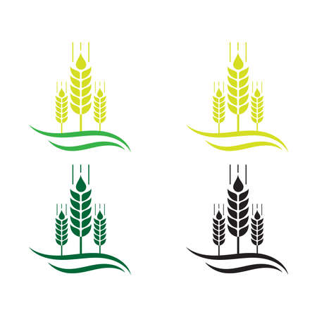Agriculture wheat Logo Template vector icon design, Ears of Wheat, Barley or Rye vector visual graphic icons, Agriculture icon. Vector concept illustration for design. wheat multi-color icon. Elements of farm set. Simple icon for websites,