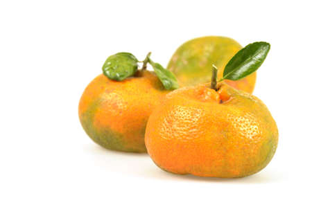 chemically: Naturally, not chemically ripened tangerines that were freshly picked. Stock Photo