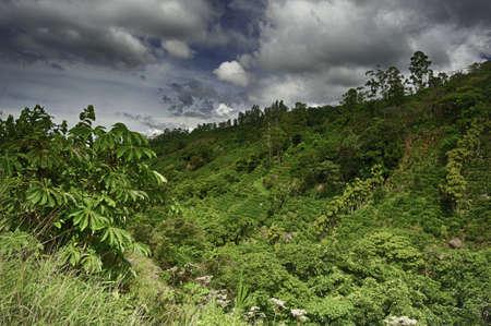 コーヒーは、コスタリカの段々 になった丘の斜面で育ちます。 写真素材