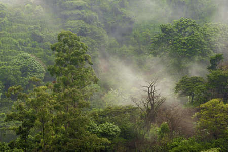 Mist drifts across coffee fields located in the central valley of Costa Rica. Stok Fotoğraf