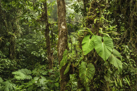 Photograph taken deep inside the Monteverde Cloud Forest in Costa Rica. photo