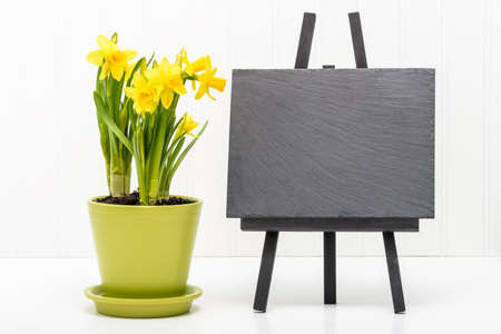 blank slate: Spring daffodils and a blank slate suitable for including your own message. Stock Photo