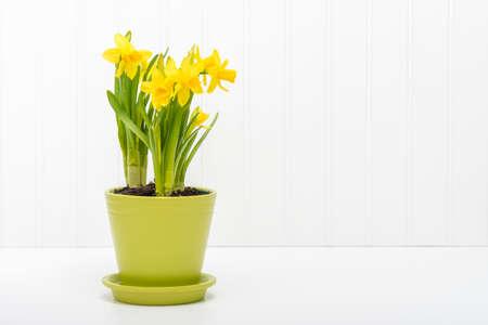 Regeling van mooie die gele narcissen in een groene bloempot worden geplant.