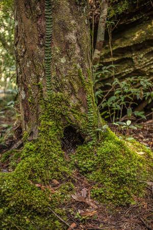 burrow: Burrow of tree stub Stock Photo