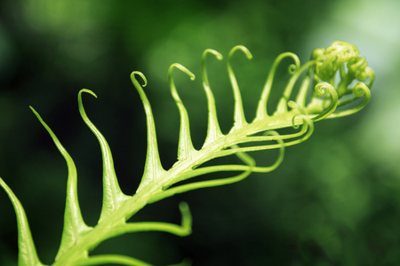 abstracted: The curled leaves of ferns Stock Photo