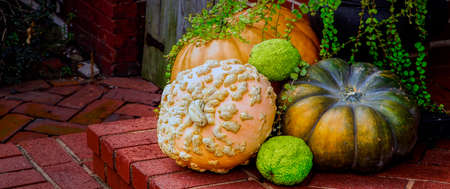 Decorations for thanksgiving sitting out on a northern Virginia doorstep. Stock Photo