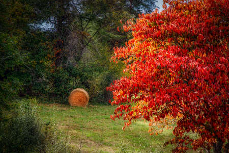 The beginning of autumn in northern Virginia in a forest near Manassas. Stock Photo
