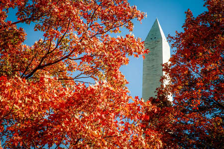 The trees of autumn in Washington DC with the Washington Monument in the background.