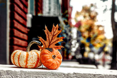A traditional Thanksgiving display on a street in Alexandria, Virginia.
