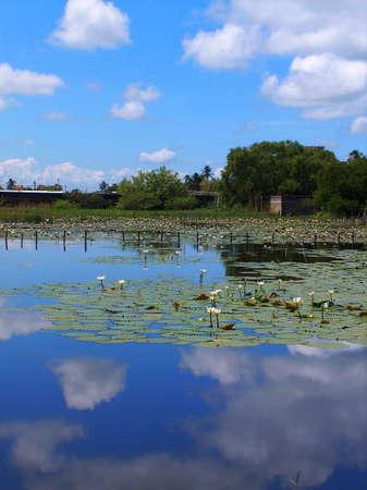 mirrored lagoon