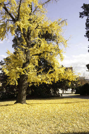 Fallin Leaves