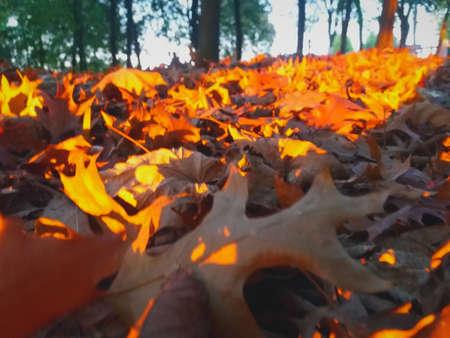 Autumn leaves seem to burn Banco de Imagens