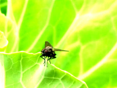 A close-up of a small fly sitting on a green leaf Stock Photo