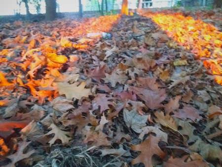 Autumn leaves seem to burn Imagens