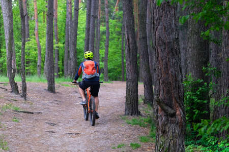 Sport and active life concept. Cyclist in protective. Cycling on bike in coniferous forest on summer day among many green trees. Healthy lifestyle.