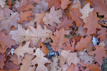 Brown oak leaves. Landscape in forest in late autumn. Top view.