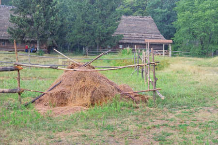 Straw stack in village in summer. Rustic landscape with green forest background. Collecting dry hay in the traditional way.