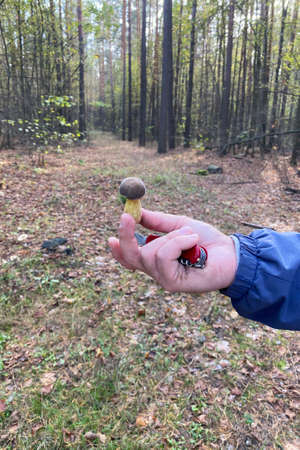 Forest mushrooms in the hand. Closeup male hand is holding mushroom. Autumn vacation in nature. Banco de Imagens