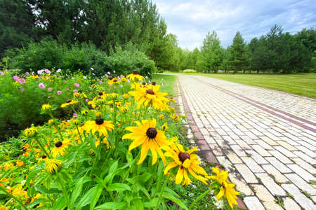 Echinacea flowers in spring sunny park, closeup. Yellow flowers for herbal medicine. Bright meadow. Banco de Imagens