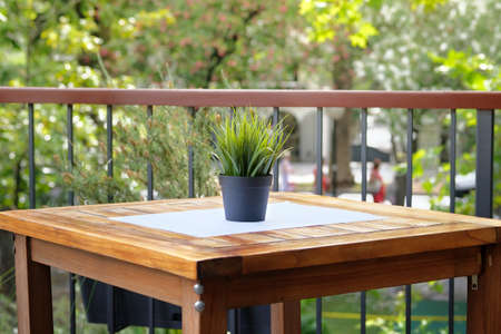 Pot with green flower on wooden table of outdoor street cafe. Design of summer restaurant. Фото со стока