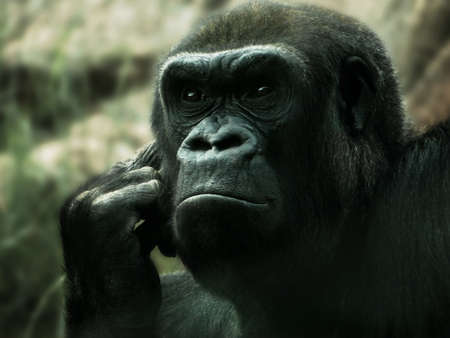 Gorilla in deep thought Stock Photo
