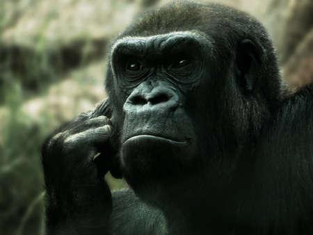 Gorilla in deep thought Stockfoto