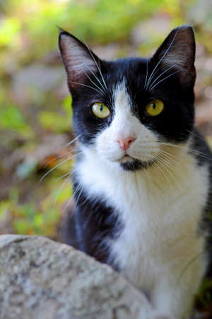 Black and White Cat in Green Forest Stock Photo