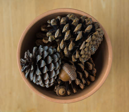 Clay Pot of Pinecones and Acorns on Wood Background