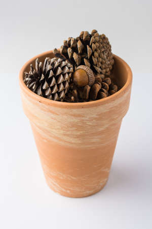 Clay Pot of Pinecones on White Background Front View