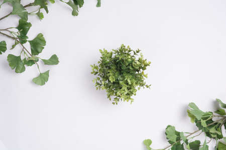 Small Plant Centered Tree Branches Flat Lay Top View
