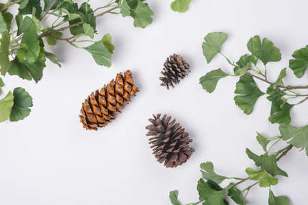 Pine Cones with Branches Flat Lay Top View Stock Photo