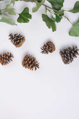 Pine Cones with Branches White Space Flat Lay Top View Stock Photo
