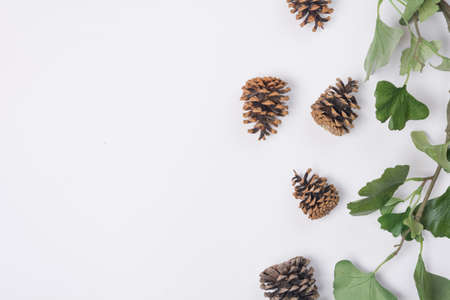 Pine Cones with Branches White Space Horizontal Top View Stock Photo