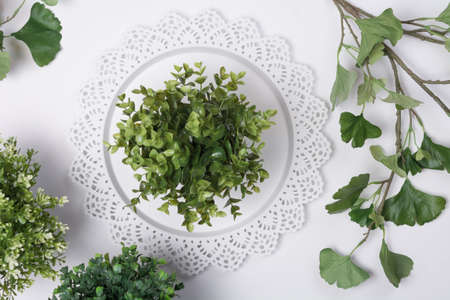 Small Plant on Tray with Foliage Flat Lay Top View Stock Photo