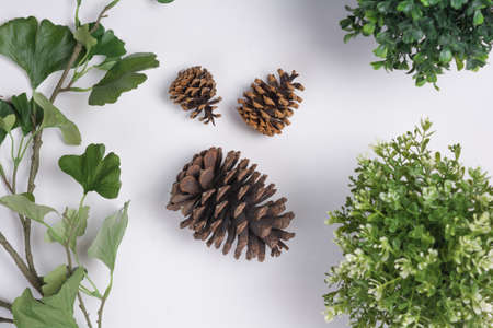 Large Pine Cones with Foliage Flat Lay Top View Stock Photo