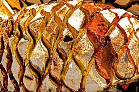 agave: Agave frutas utilizados para producir Tequila en Mexico Bases para una naturaleza abstracta Foto de archivo