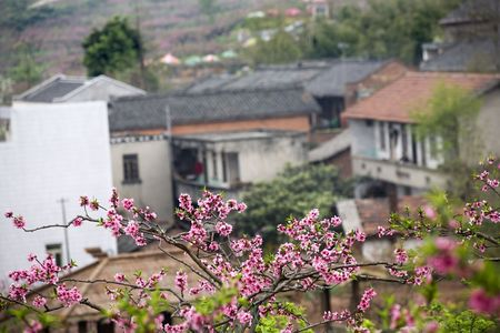reviewer: Chinese Peasant Houses, Peach Tree Village, Pink Blossoms, Chengdu, Sichuan, China  RESUBMIT--In response to comments from reviewer have further processed image to reduce noise, sharpen focus and adjust lighting.